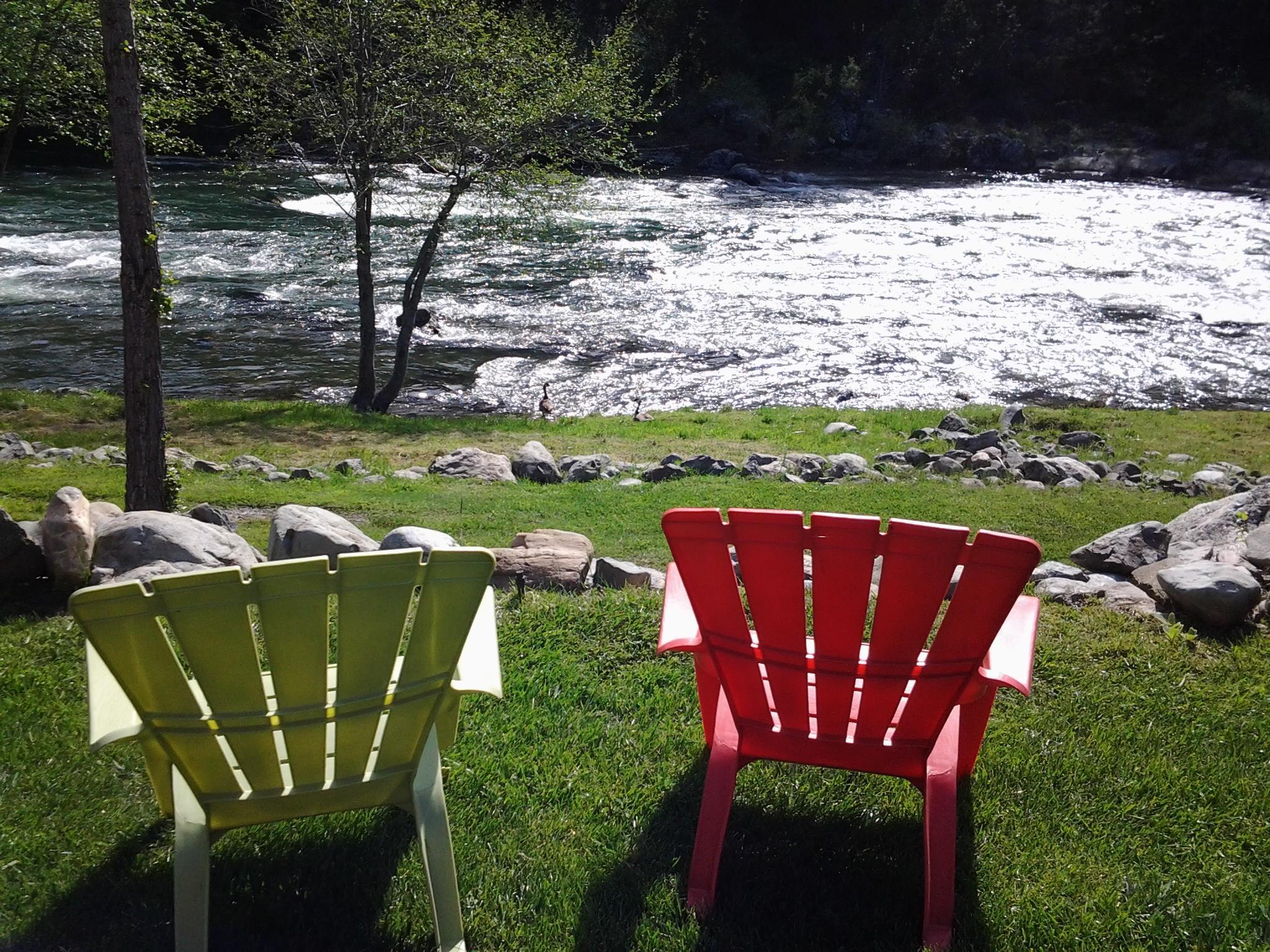geese-at-river-april-2016