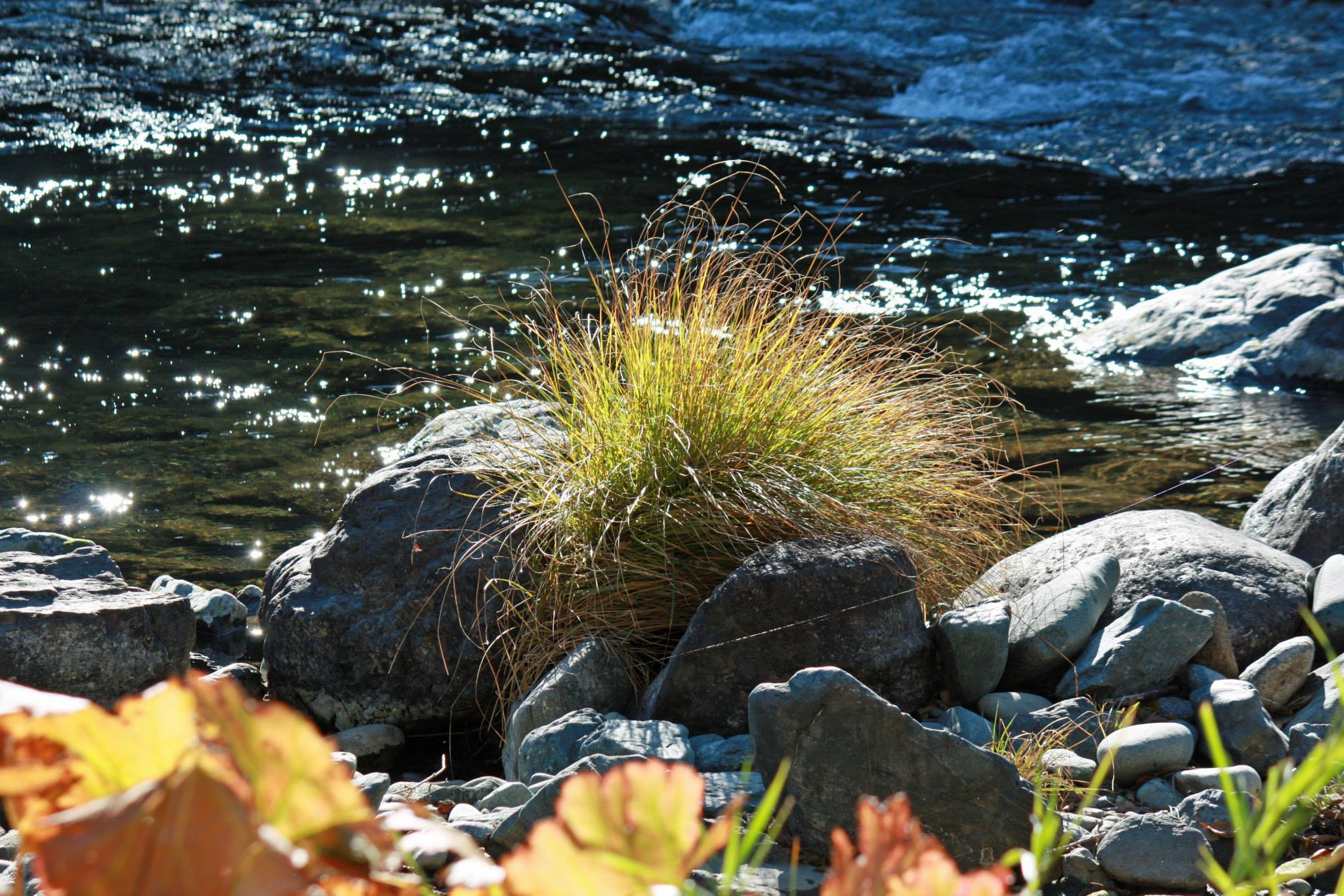 grass-on-river